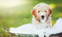 BARRK Pet Wash-Self Serve Pet Washing Station Gift Card, a $10 Value for ONLY $5!