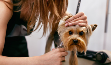 Tossled Tails-Small - Medium Sized Dog Grooming Services by Tossled Tails, a $85 value for only $39!