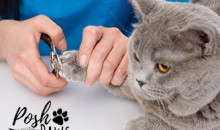 Posh Paws Tri-Cities-Save 61% on Cat Grooming, a $100 Value for ONLY $39!