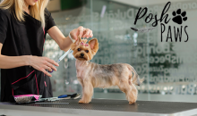 Posh Paws Tri-Cities-54% Off a Dog Grooming Package at Posh Paws Tri-Cities, an $85 Value for ONLY $39!