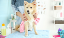 Lucky Puppy Grooming-FULL DAY of Doggie Daycare PLUS Grooming -- a $50 value, for ONLY $25!