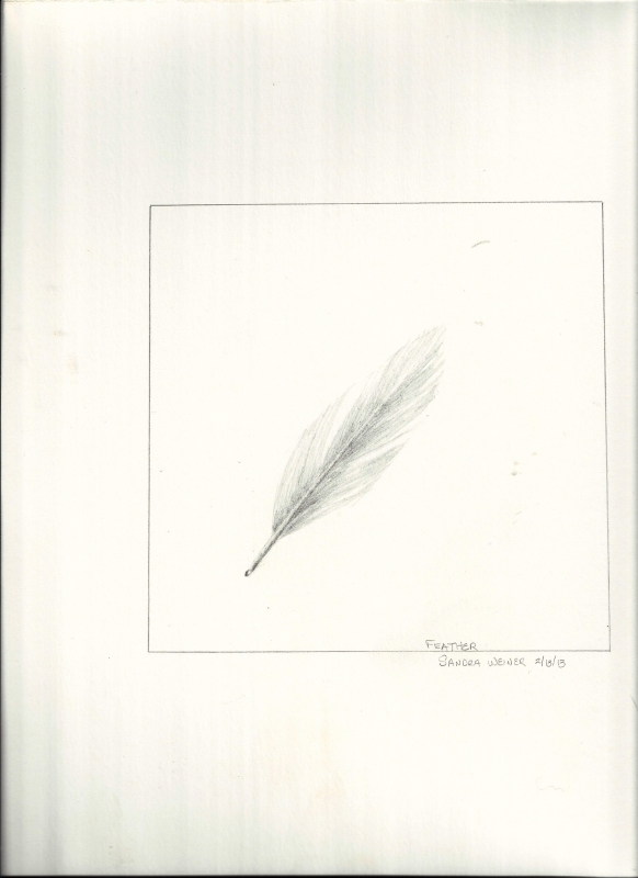 feather-study
