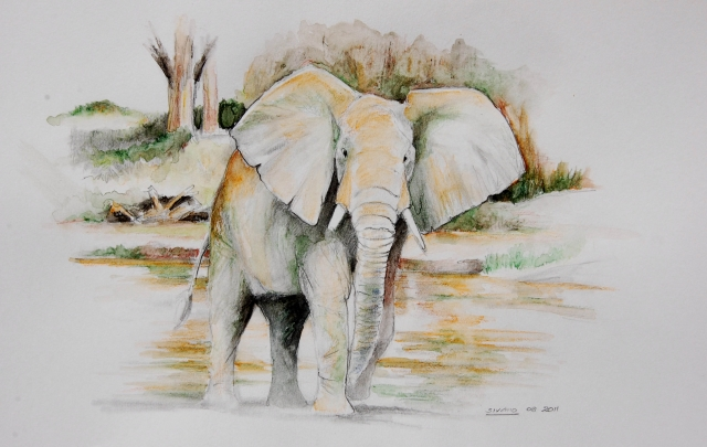 ELEPHANT IN COLOUR