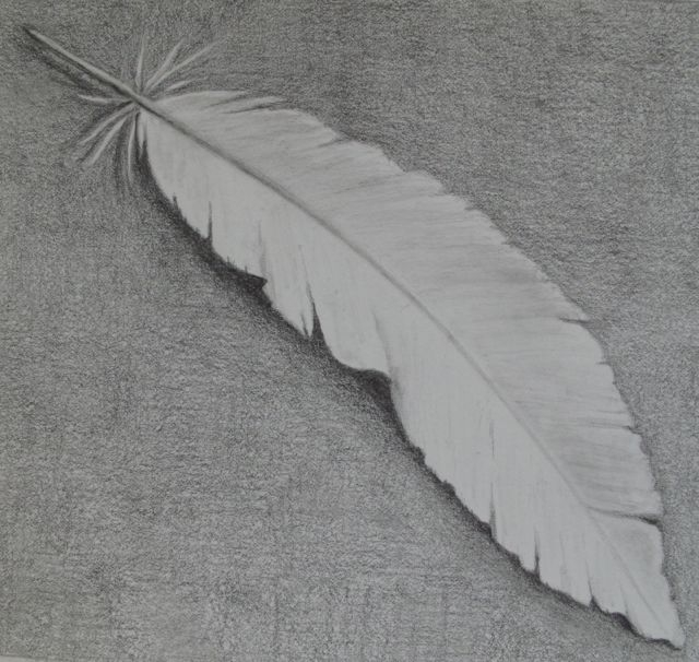 Week 1 -feather