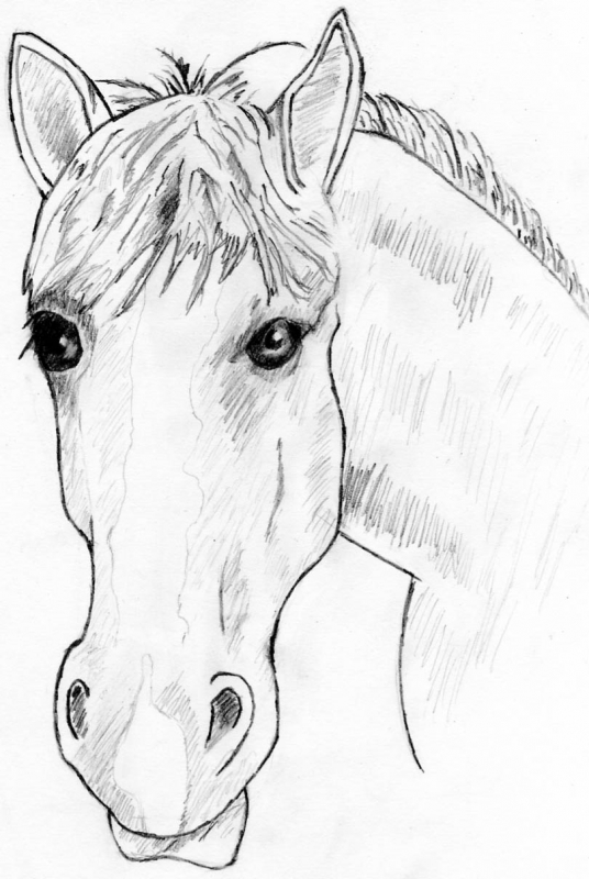 Draw_Horse_Head_drawspace.com