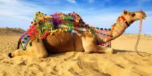Air & 9-Days Treasures of Morocco Vacation