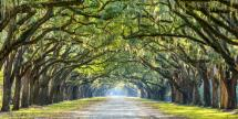 7-Day U.S. Historic South Guided Tour