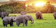 Air & 7-Nt South Africa Pkg w/ Safaris