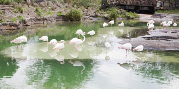 Buena Vista Luxury Villas - Costa Rica Resort