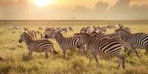 Air & 9-Day Cape & Safari Escorted Tour