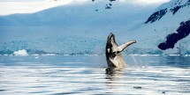 7-Nt Alaska Oceania Cruise From Seattle