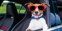 Nationwide Savings on Car, Van, & SUV Rentals