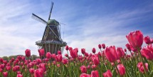 8-Day Amsterdam & 9-City River Cruise