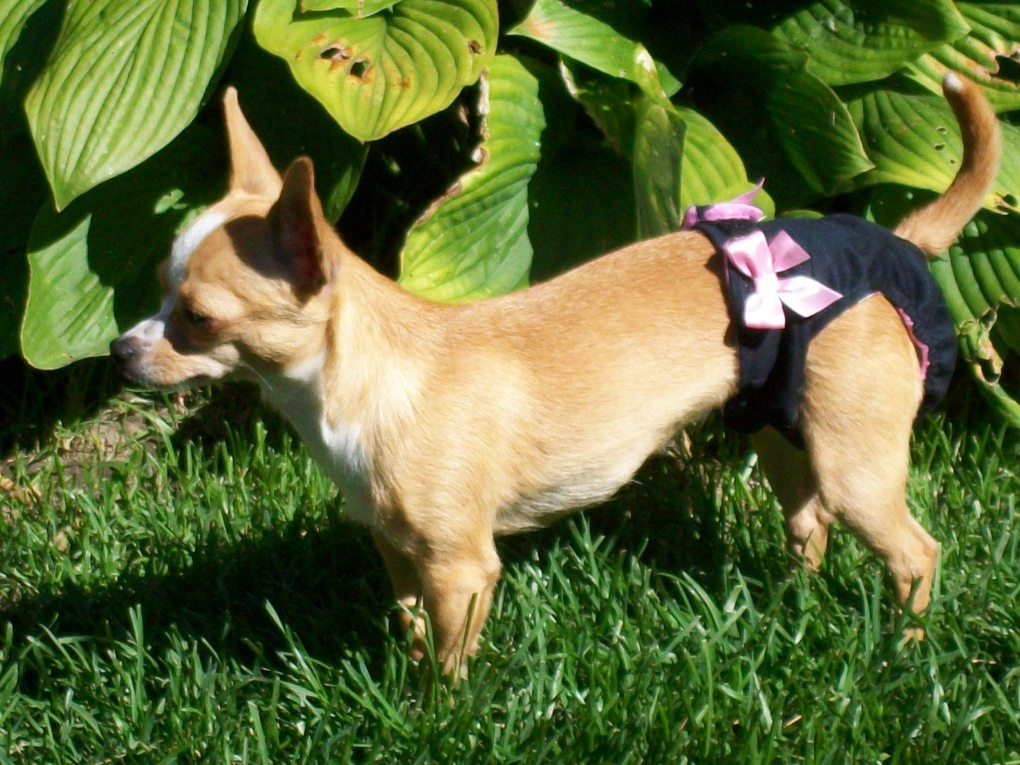 Couche culottes hygiéniques haut de gamme pour chiens femelles. 00002