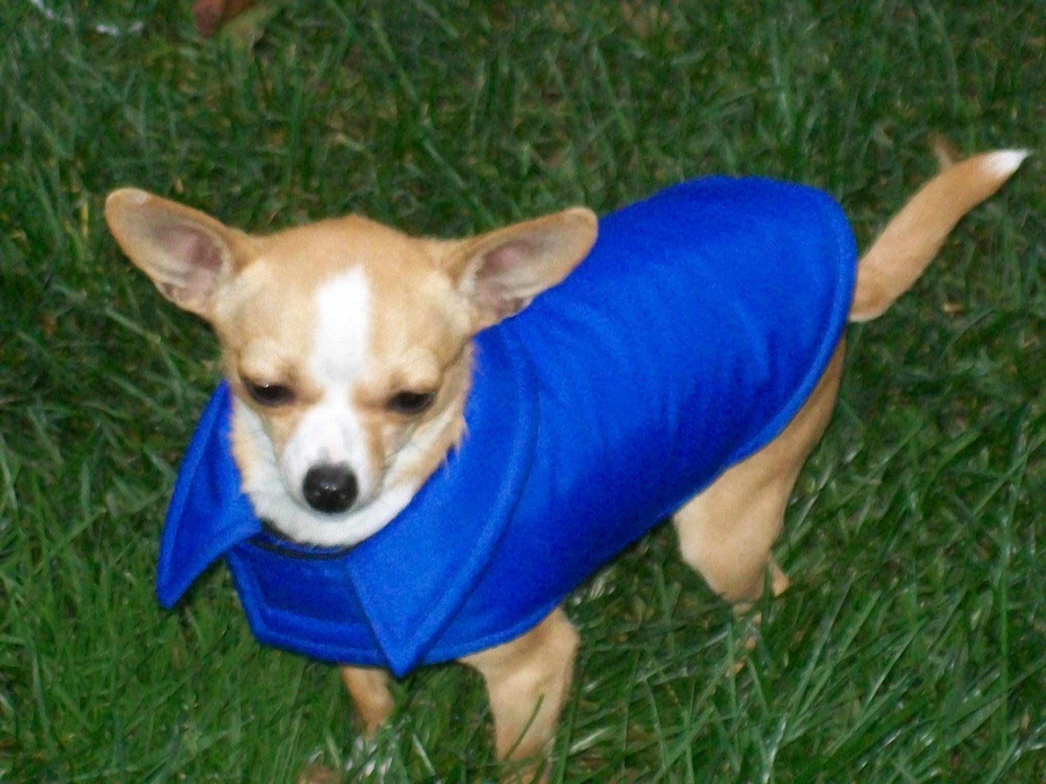 Manteaux imperméables pour chiens de petites races