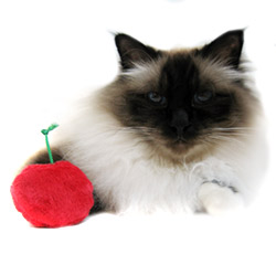 Cherry Catnip Toys