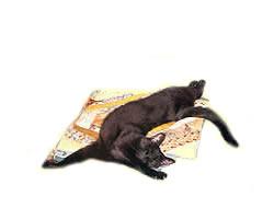 Cat Quilt Cotton 00124