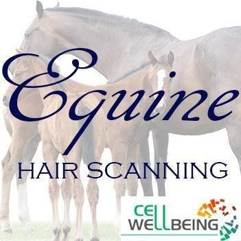 Equine Hair Scanning