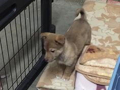 動物愛護支援 募金 JATFA41245