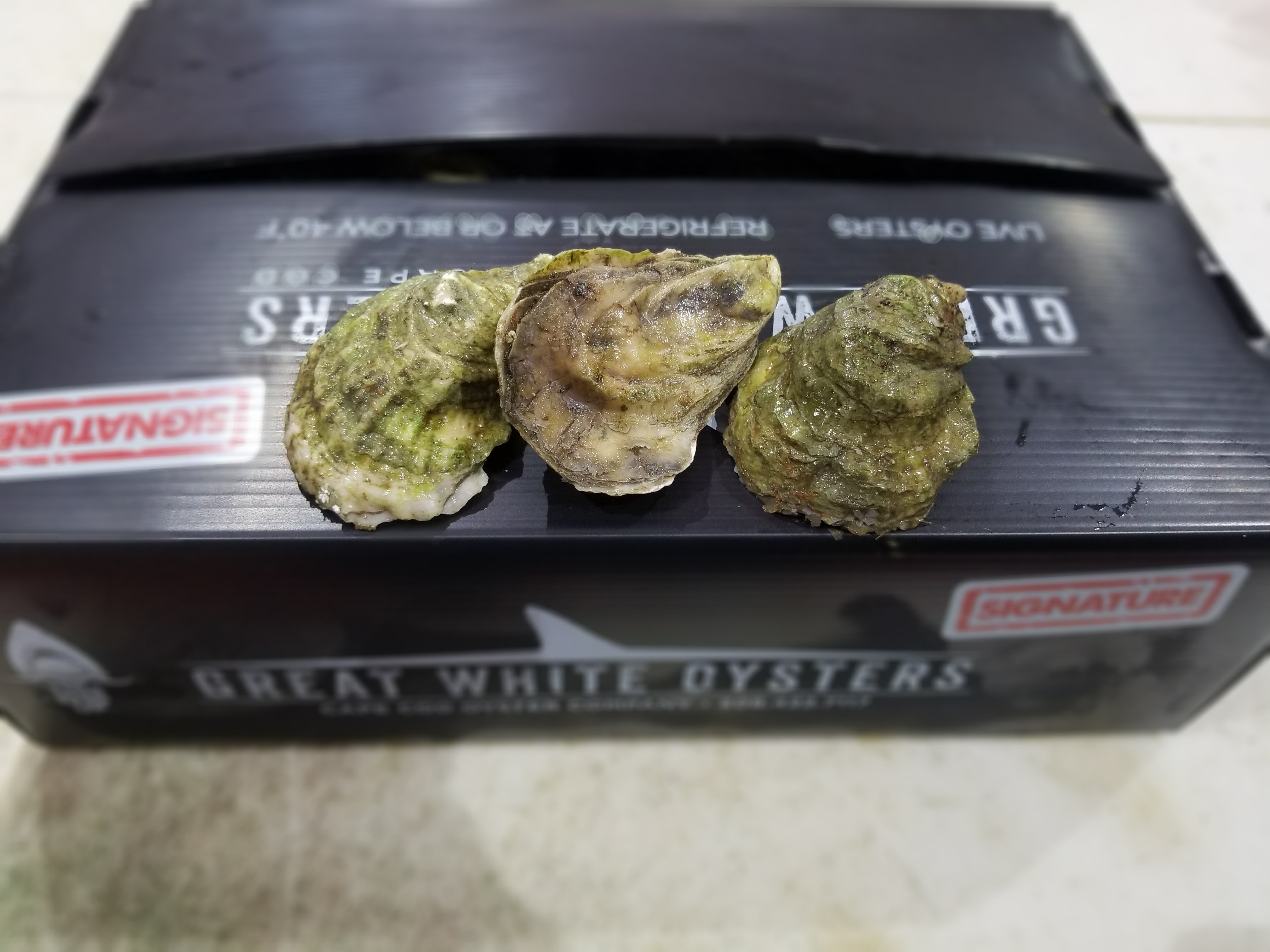 Great White Oyster 100 ct 00008