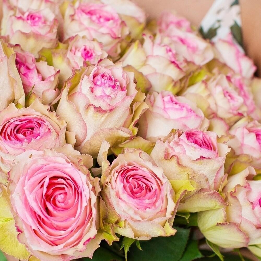 тренировках ядовито розовые розы фото того чтобы