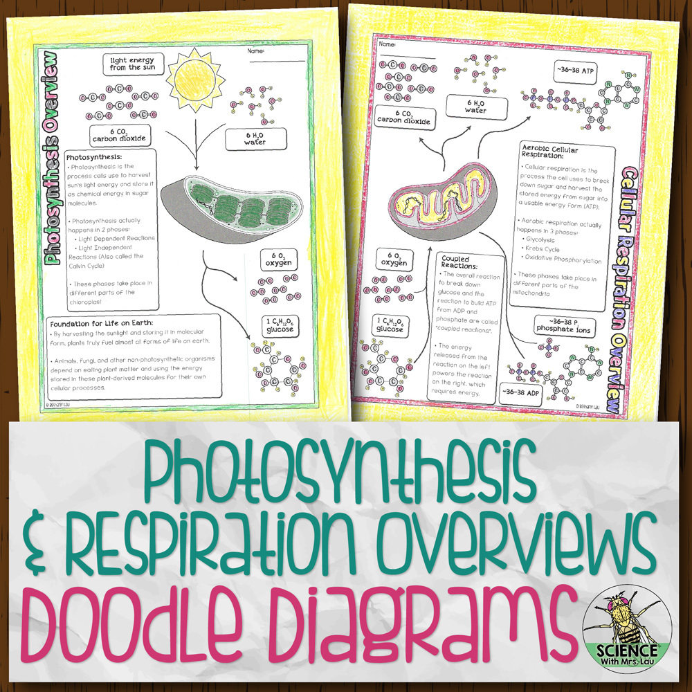 Photosynthesis and Respiration Overviews Doodle Diagrams ...