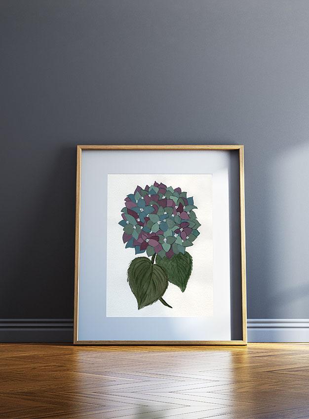 Hortensia / Hydrangea 00009