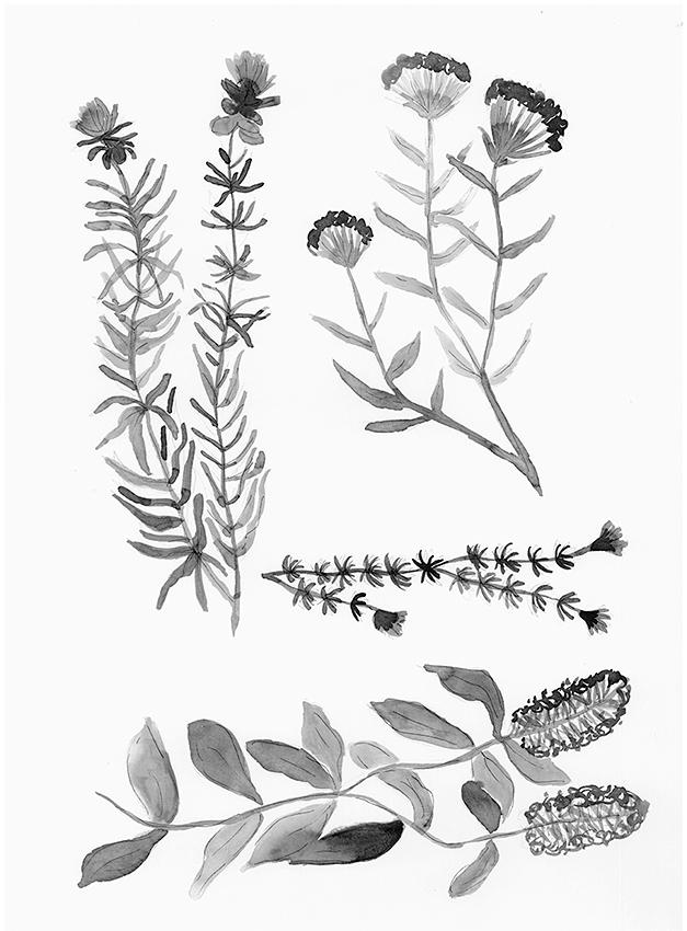 Botánica 5