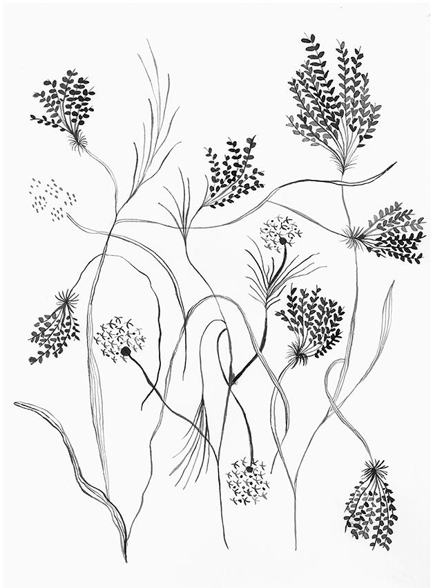 Botánica 6 00005