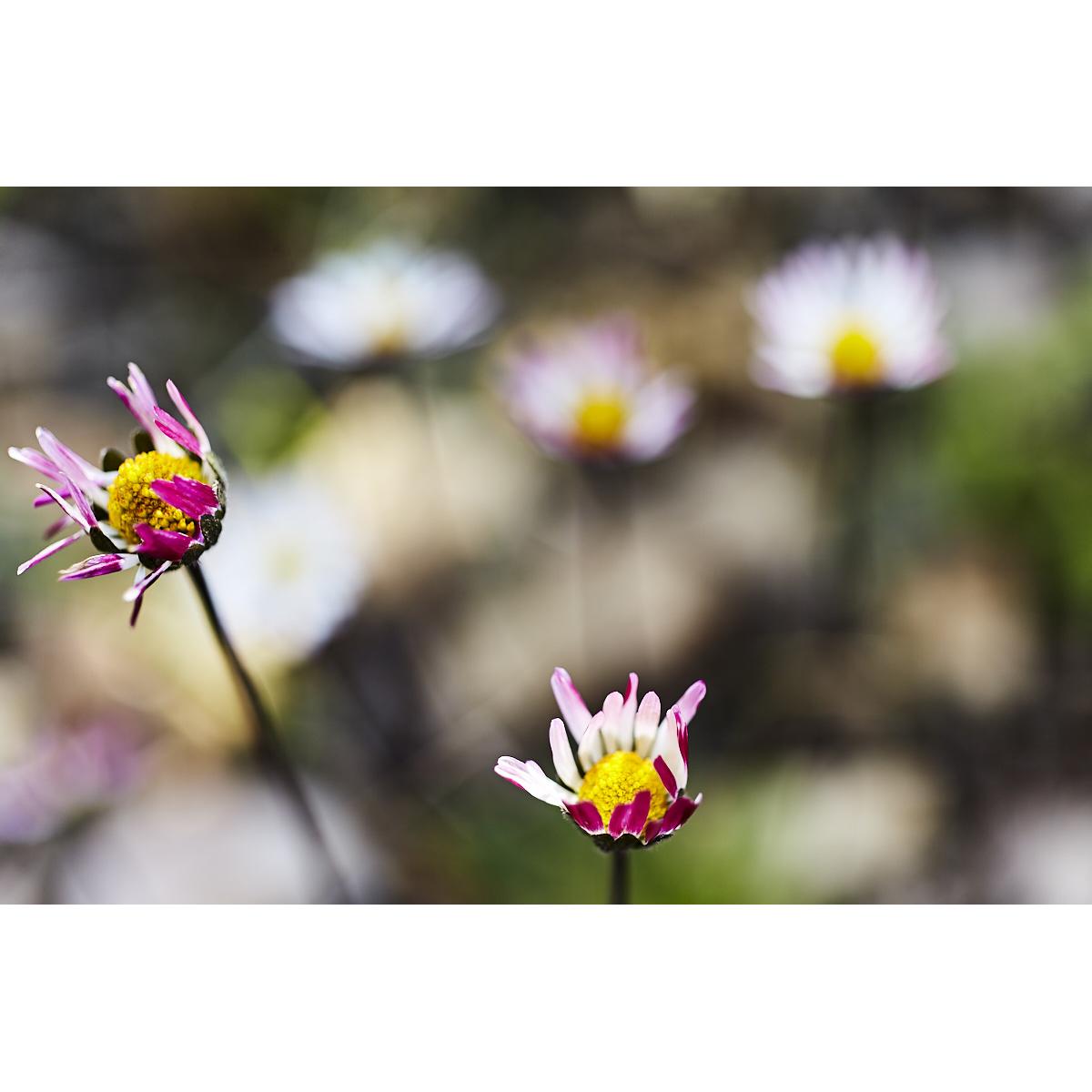 Spring Flowers/Ein Qiniya 001