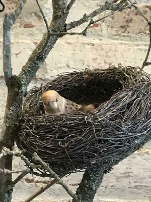 Vine Nest