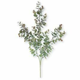 Eucalyptus Leaf Branch