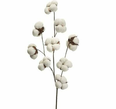 Cotton Sprig