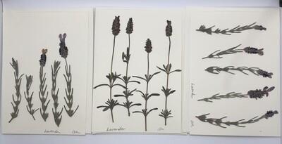 Flower Card (5x7), Lavender