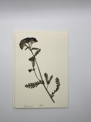Flower Card (5x7), Yarrow