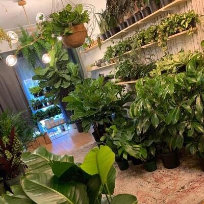 New Indoor