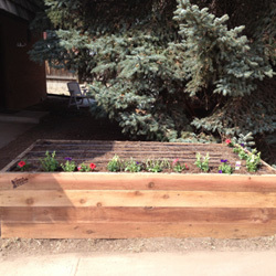 "* Cedar Upgrade (+$80.00) Cedar lasts twice as long, looks better, and even smells better than Douglas Fir. Cedar is ""nature's treated wood"" that will not rot or degrade for well over 10 years."