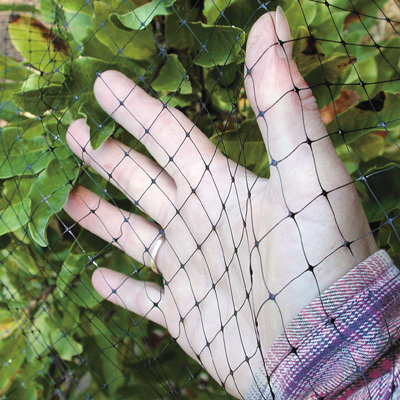 * General Pest Netting (+$80.00) A frame around your garden with secure netting to keep cats, dogs, deer, rabbits, and all other pests out of the garden.