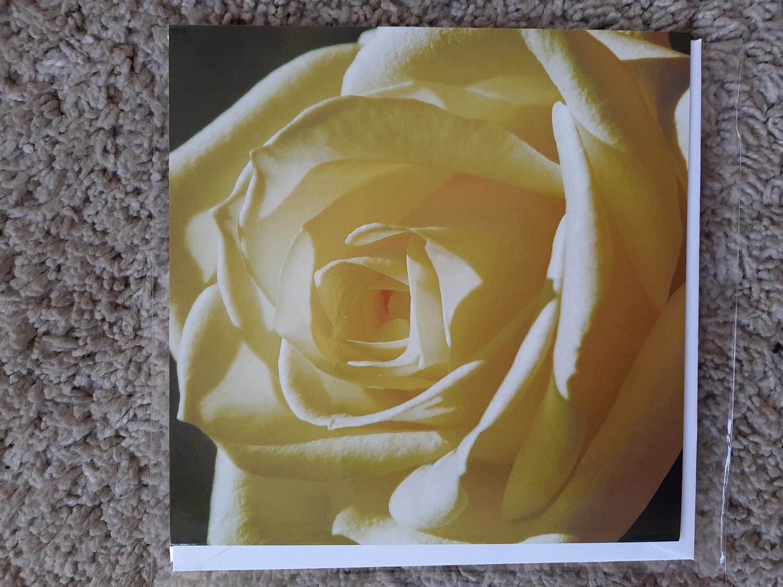 Karte quadratisch Rose gelb