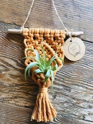 Tied & True Colored Air Plant Hanger