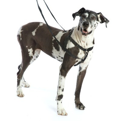 2 Hounds- Harness Package - Large Black