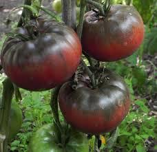 Tomato- Black Krim