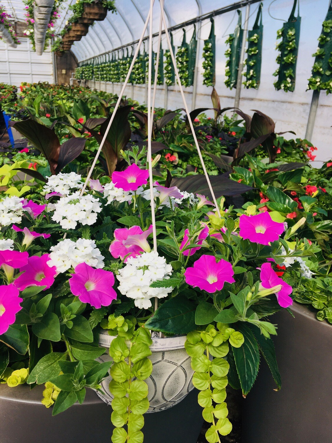 Seaside Collection Hanging baskets