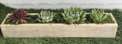 Succulents - Vintage wood long