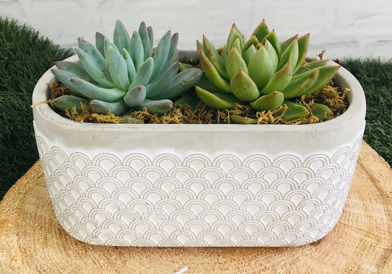 Succulent Oval Pot