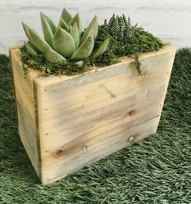 Succulents - Vintage wood tall