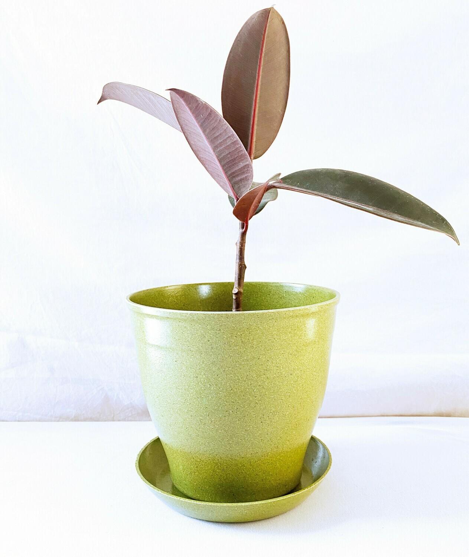 EcoForms Nova 5 Pot