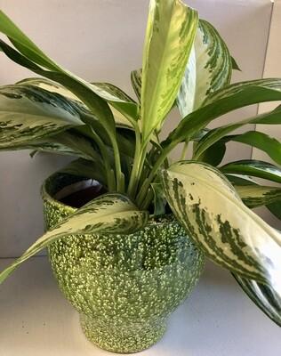 Green Terracotta Pot 9x9