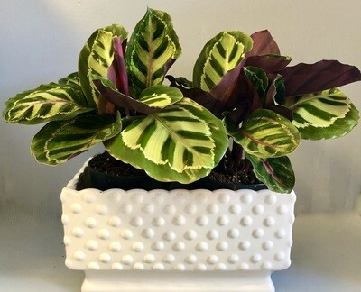 Ceramic Hobnail Planter