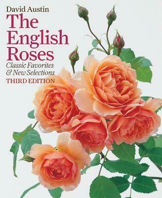 IG English Rose